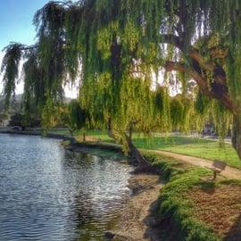 Monterey mexico instagram photo of park