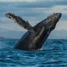 Monterey mexico instagram photo of whale