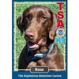 TSA instagram photo of explosives detection dog